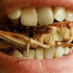 défi dégustation d'insectes anniversaire insolite paris evg evjf intripid sortie entre amis