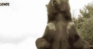 ours defi insolite paris anniversaire evjf evg insolite