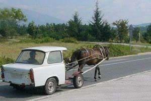 cheval belgrade evg evjf belgrade